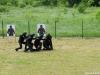 sajam-militarije-sisak-12_30