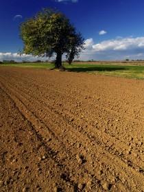 poljoprivredno-zemljište-210x280