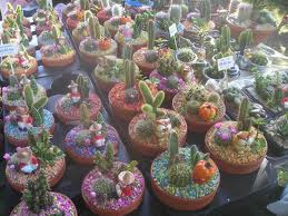 kaktusi beslic
