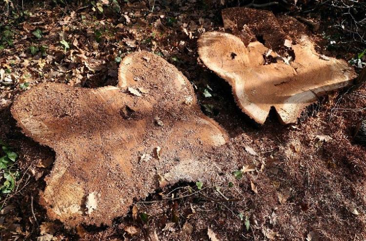 Pustošenje šuma i zlouporaba položaja i ovlasti