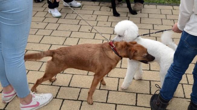 Iz ograđenog dvorišta ukraden pas